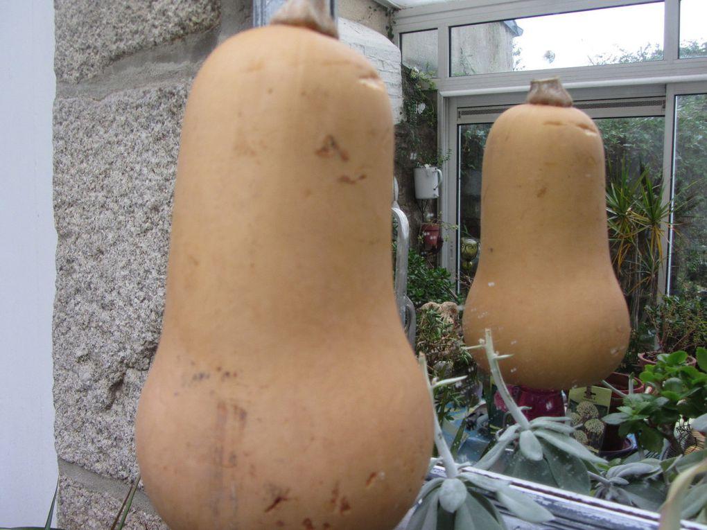 Velouté de carotte-butternut