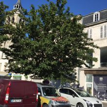 Victoire, l'arbre est sauvé !