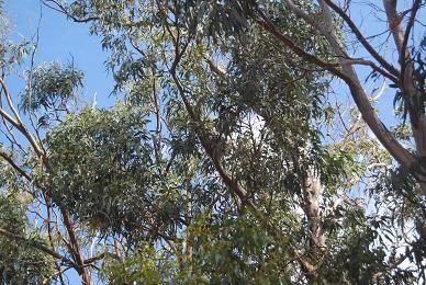 Chercher les kangourous...