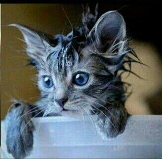 Sentir le chat mouillé