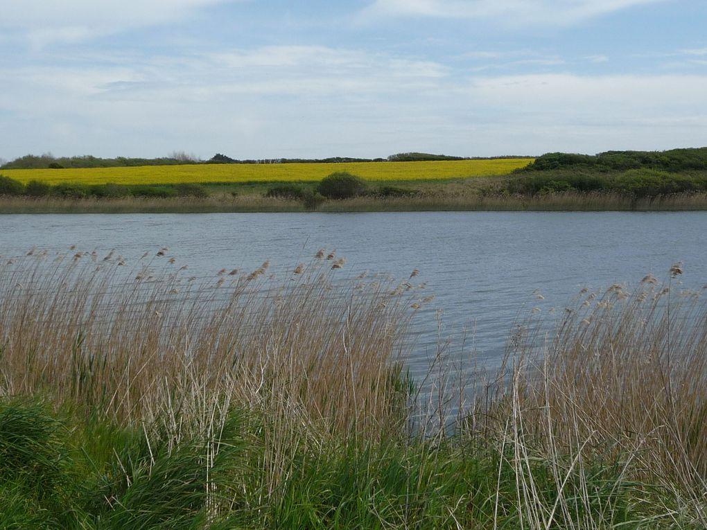 951. L'étang de Saint Vio, Plonéour-Lanvern. 29.