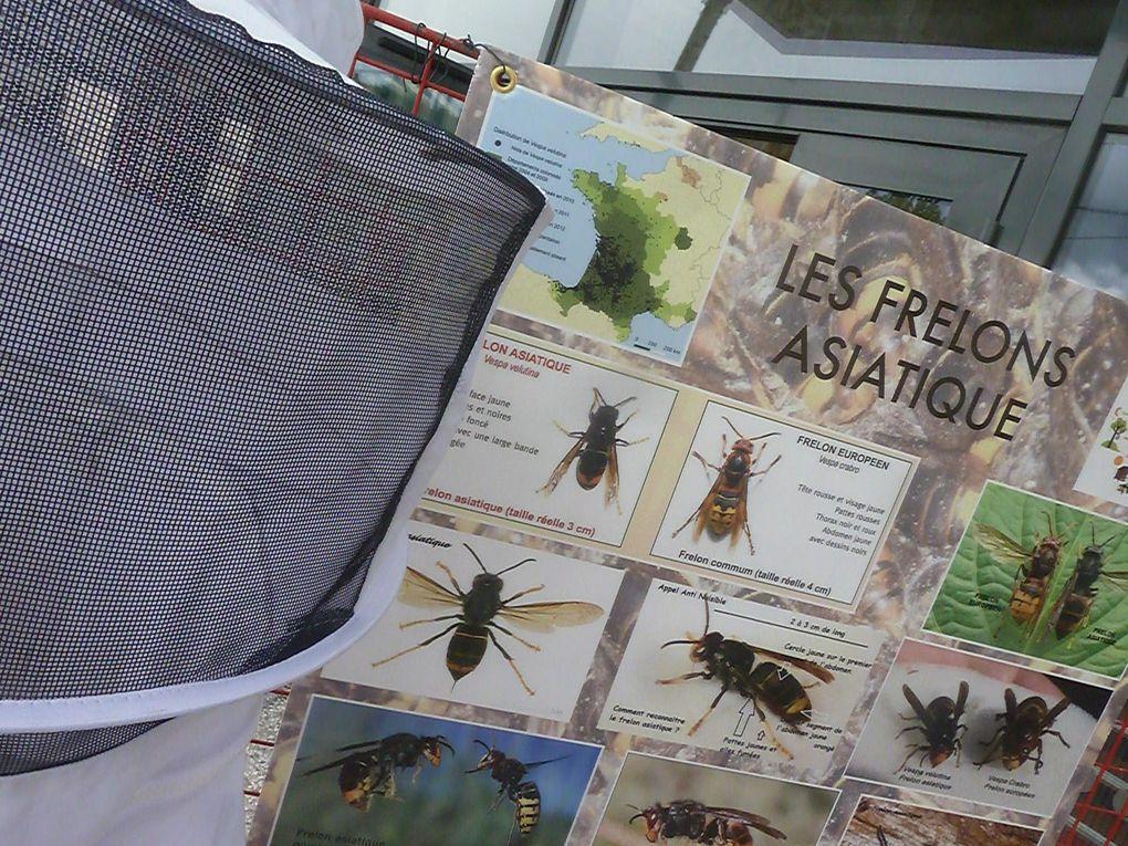Pour le piège contre le prédateur des abeilles.... 2 bouteilles d'eau, percer des petits trous pour ne pas piéger les autres insectes et au fond... du sirop de de fruit de préférence rouge et de la bière.....