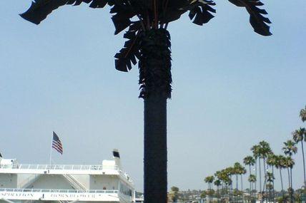Palmier fabriqué à partir de pneus San Diego. étonnant !