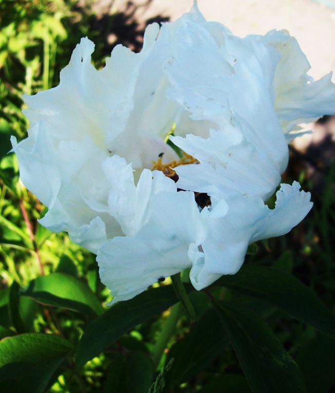 Orchideen, Iris und andere bezaubernde Gewächse in meinem Garten