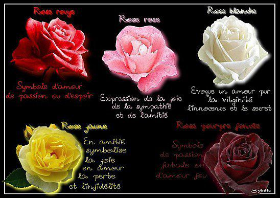 Signification 10 roses