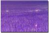 La prairie aux lucioles