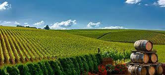 La vigne en Illinois