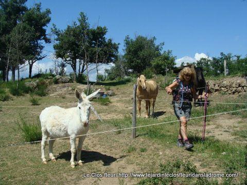 Beaucoup de chevaux rencontrés au cour de notre balade .....