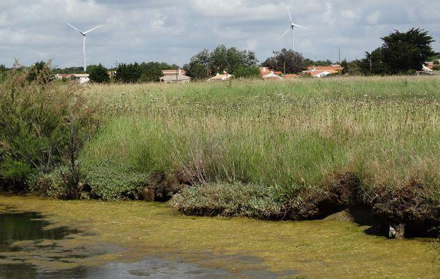 Aux marais d'Olonne