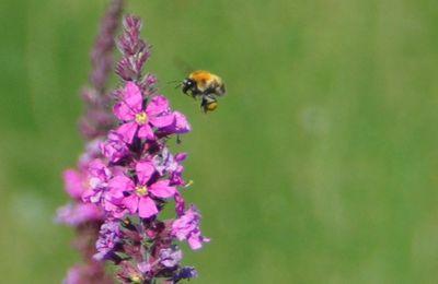 Le Jardin Punk et les pesticides