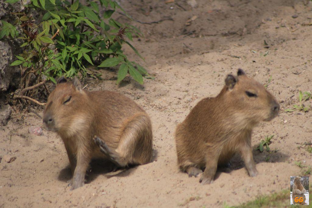 Besuch Tierpark 22.05.21+Zoo 24.05.21