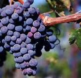 #Merlot Producers New South Wales Australia