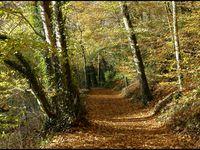 Bois de Kéroual à Guilers (Finistère)