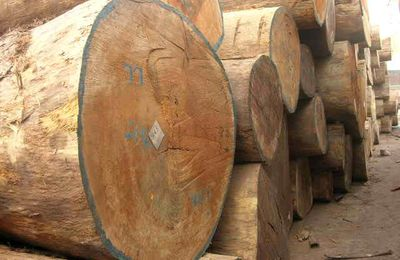 The wood and timber  supplied by ALPHAGA & FILS