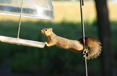 Donatien l'écureuil