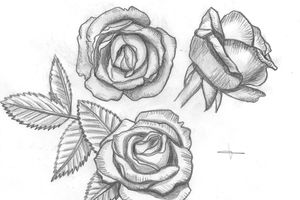 [dessin] roses du jardin