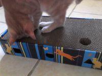 Oliver a testé le griffoir scratch & play !