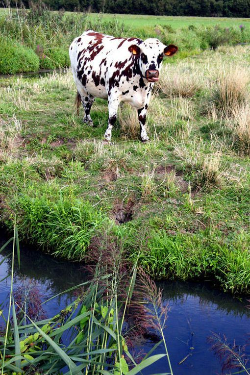 Monde Animal - Photos Thierry Weber Photographe La Baule Guérande