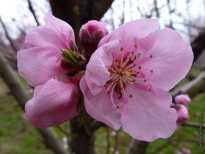 C'est le retour du printemps (3) pour #photodimanche