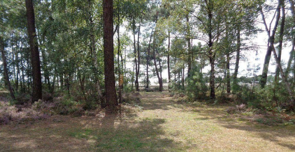 Valorisation du Bois-Parc Robert Manceau dans le quartier «Cité des Pins»