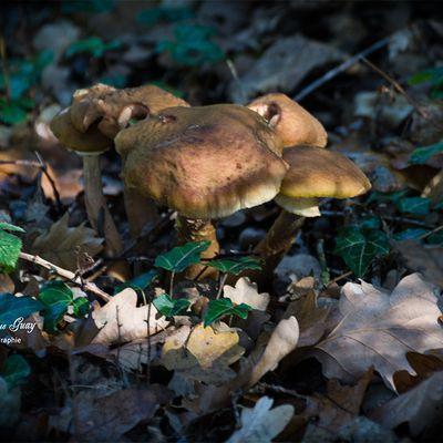 Chapeaux les champignons !