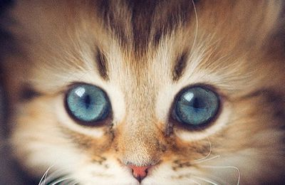 Chaton - Cute - Jeans - I-phone - Picture- Free