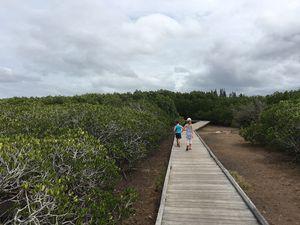Sentier de découverte de la mangrove ~ Ouémo ~ Nouvelle Calédonie
