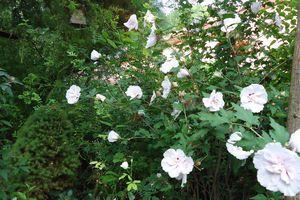Album - le-clos-fleuri-en-juillet