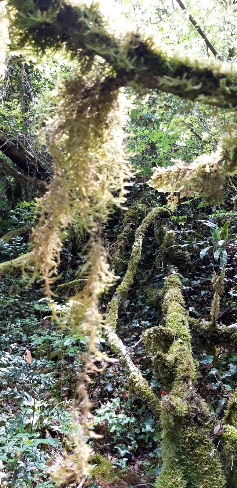 La Forêt Mystérieuse Corsavy Jeudi 6 Mai 2021