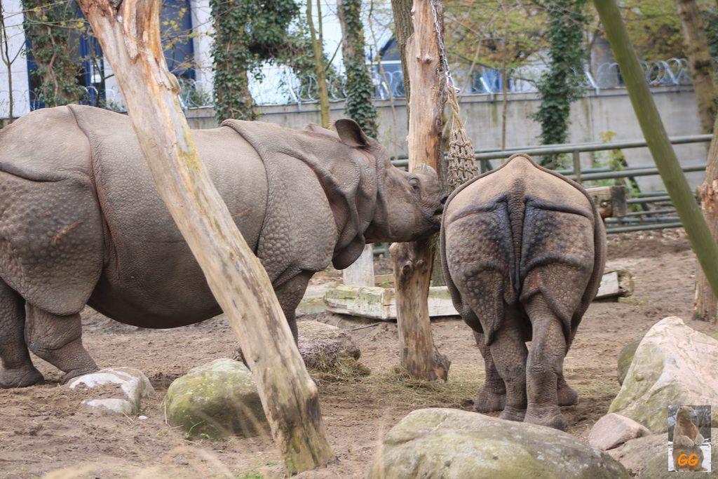 Besuch Zoo Berlin 18.04.2021