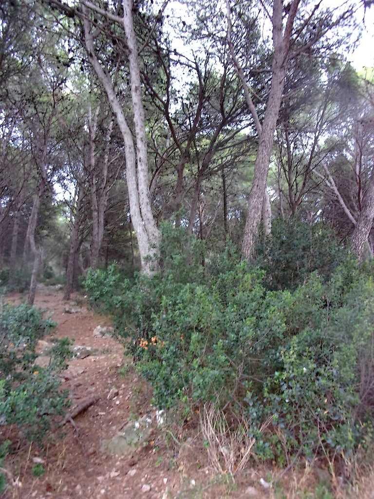 Petit Bois du Ramassis