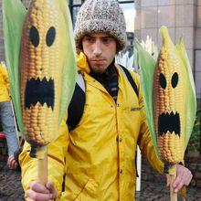 Opinion : Greenpeace et « la terrible réalité de l'activisme anti-science »