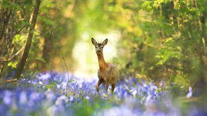Livre blanc accusateur des forestiers, contre brame du cerf...