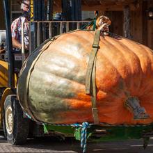 Halloween: la plus grosse «gourde» de l'année