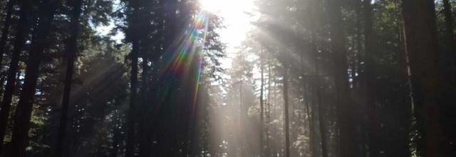 Ce matin après l'orage de cette nuit, en forêt nord ardéchoise