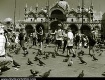 Les pigeons de Saint-Marc