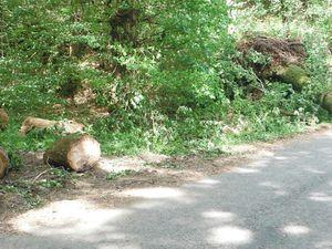 Du côté du Vaublanc. Pas de pardon pour la glissière de sécurité. Dernière photo : arbre sur la voie verte près de la gare de Saint-Lubin.