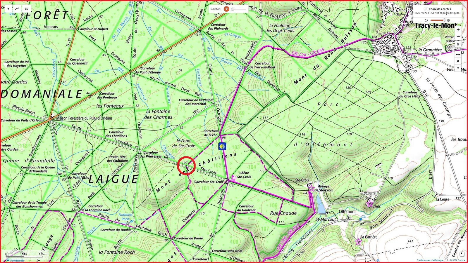 carrefour_Route Forestière de Sainte-Croix_Sentier (parcelle 101)