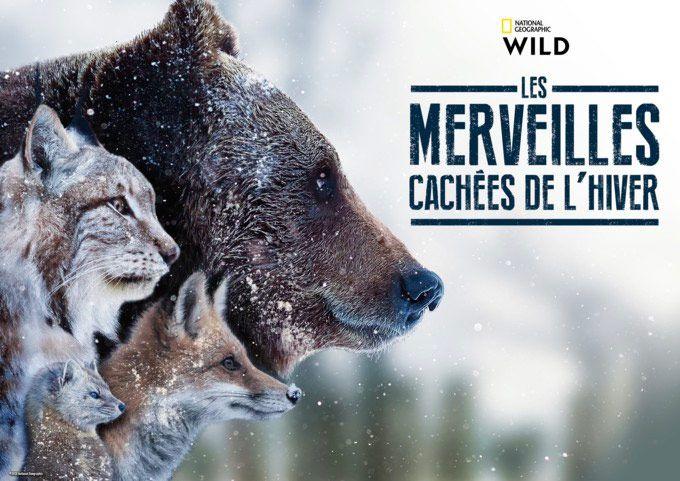 « Les merveilles cachées de l'hiver », série documentaire inédite diffusée ce soir sur National Geographic Wild
