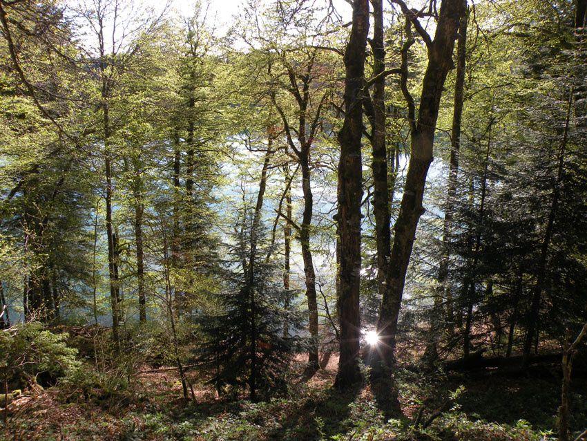 Une journée au lac Pavin