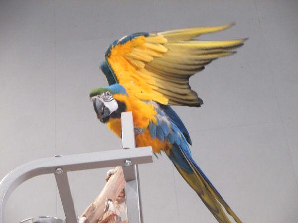 Le championnat des oiseaux du Morbihan