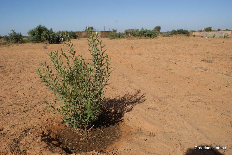 Afrika Ranch en images, décembre 2012