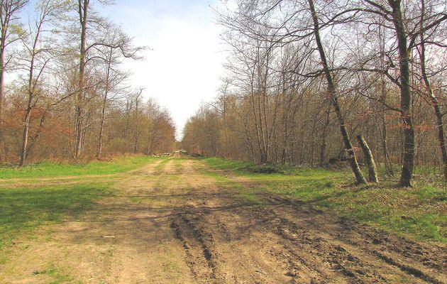 carrefour_Route du Grand Octogone_GR655