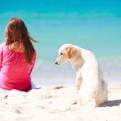 Protéger chiens et chats des méfaits du soleil