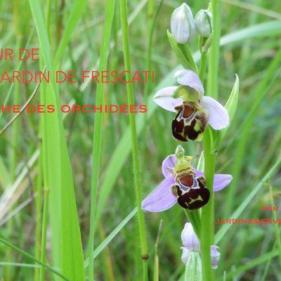 Le mythe des orchidées - Autour de Frescati