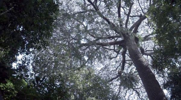 Forêt primaire & secondaire