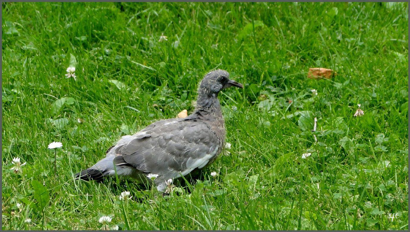 2 oiseaux - 4 photos