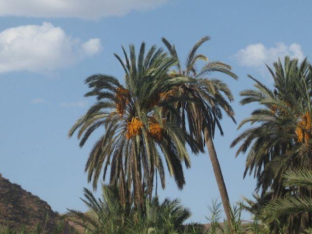 Par une route tantôt montagneuse, tantôt désertique nous rejoignons le complexe thermale d'Abaynou qui n'a de complexe thermale que le nom ,avec au passage visite de la coopérative  féminine d'huile d'argan à Mesti. Balade à la palmeraie d'Abaynou. Température 42°.