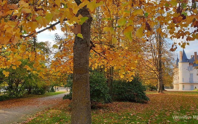 La photo du dimanche : L'automne à Rambouillet