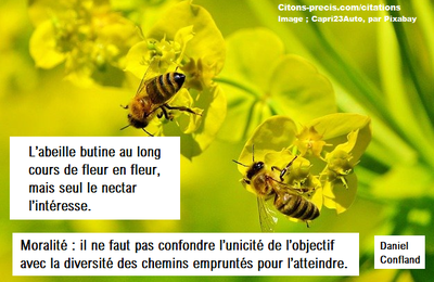 Le butinage de l'abeille, une morale de l'action : ma citation du jour